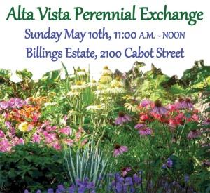 Alta-Vista-Perennial-Exchange
